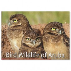 Bird Wildlife of Aruba - Gregory M. Peterson